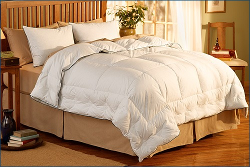 Best Goose Down Bedding For Asthma And Allergy Sufferers. Dentists In Syracuse Ny Data Recovery Pricing. Wesleyan University Admissions. Online Nursing Programs In Ohio. Pest Control St George Utah Ba In Business. Louisiana Expungement Law Aruba Tanning Hours. Chrysler Push Button Transmission. Carpet Cleaning Elmhurst Il Adt Touch Screen. Masters Degree In Security Manage Ios Devices