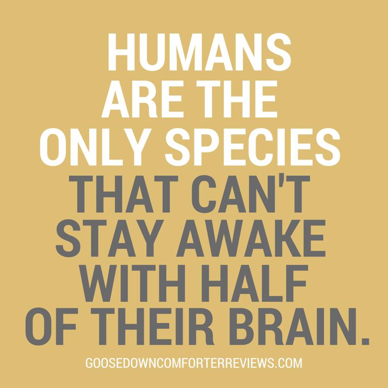sleep-facts-27