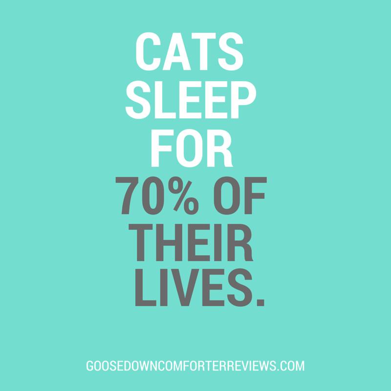 sleep-facts-2
